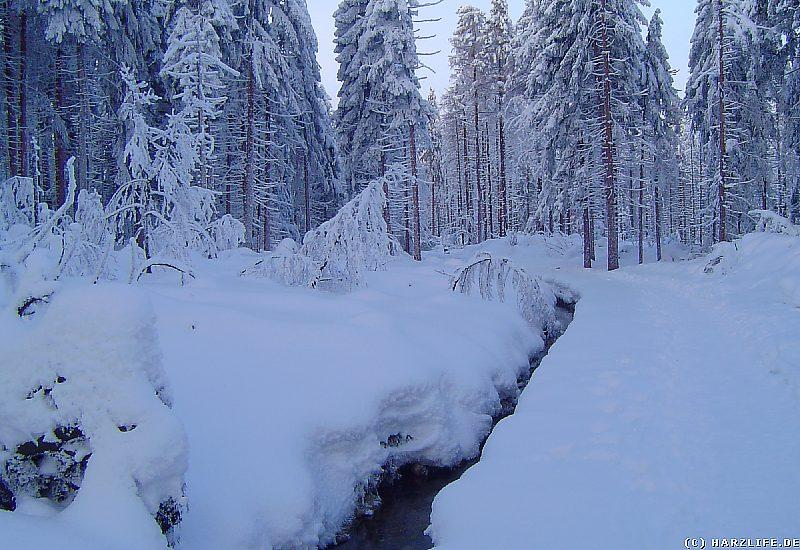 Winter im Harz - Abbegraben und Goetheweg